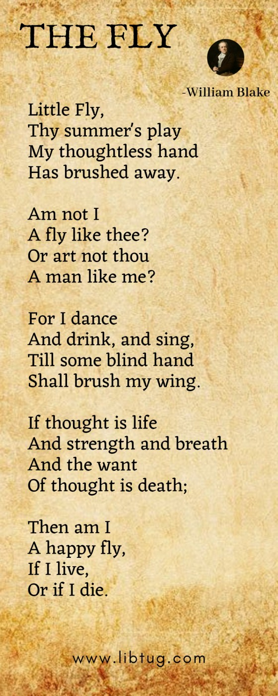 The fly by William Blake