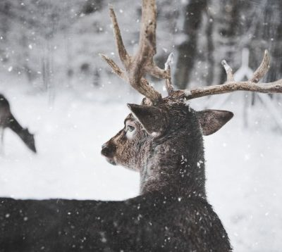 the buck in the snow analysis